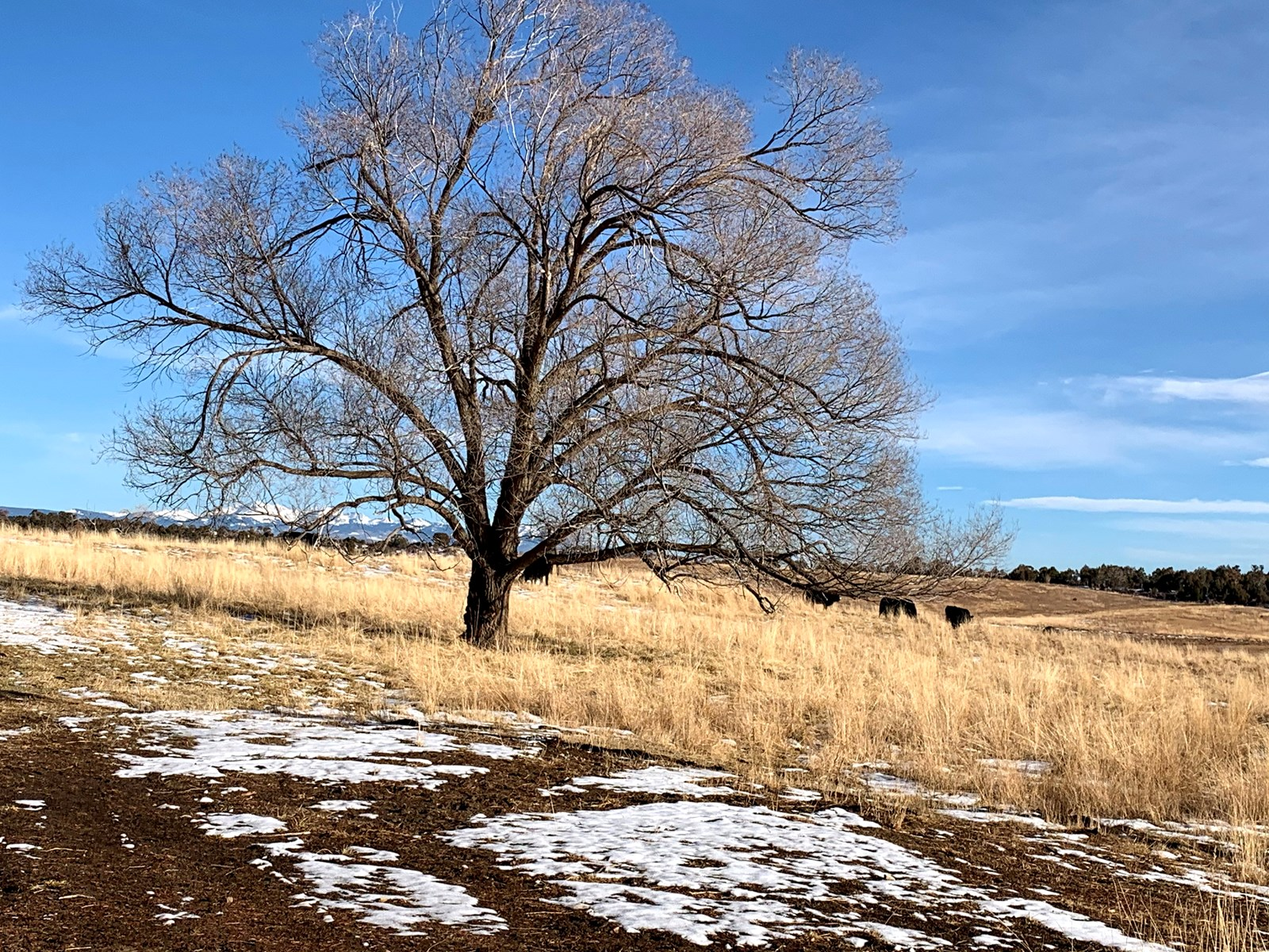 69 +/- acres of irrigated farmland in Southwest Colorado!