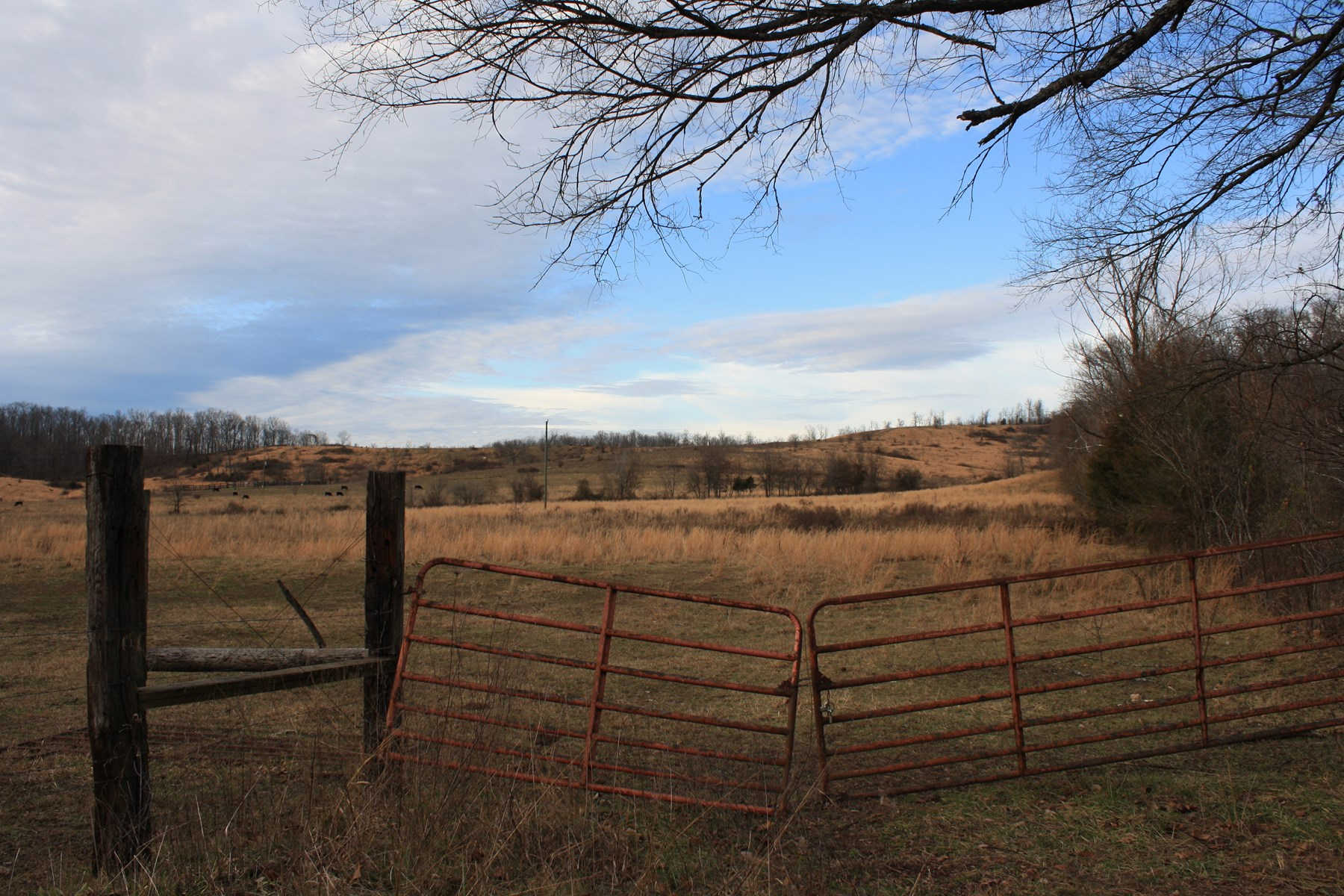 Missouri Cattle Farm For Sale