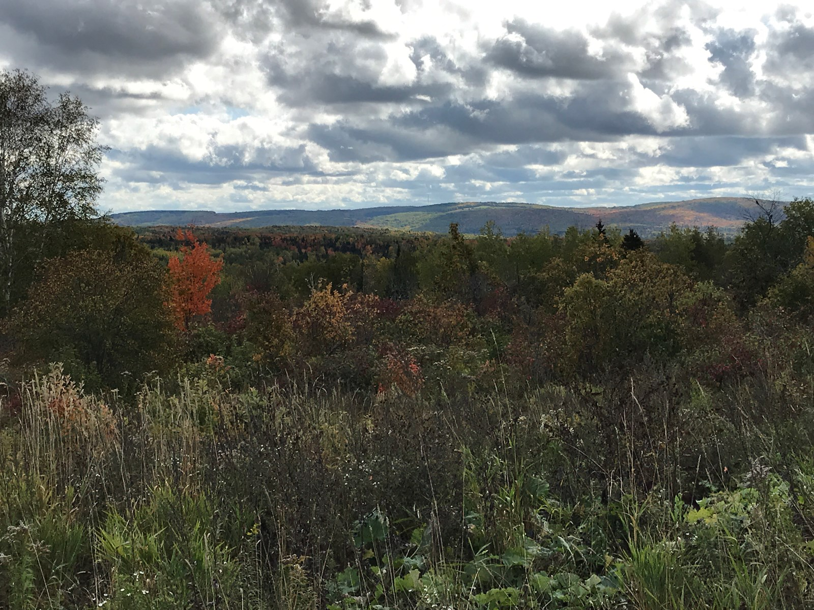Recreational Farm Land For Sale in Aroostook County Maine