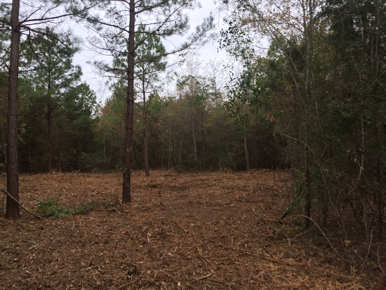 East Texas Land / Hunting/ Home site for sale.