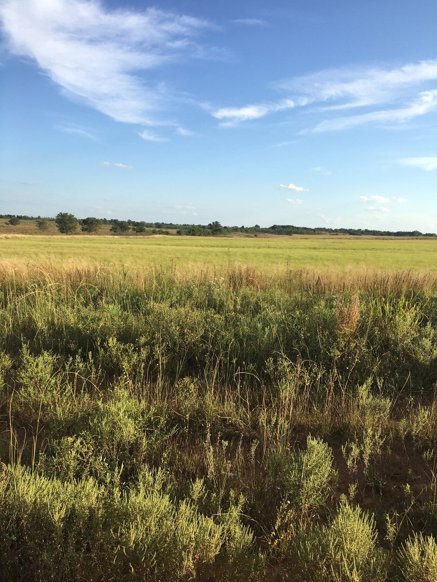 WESTERN OKLAHOMA LAND FOR SALE