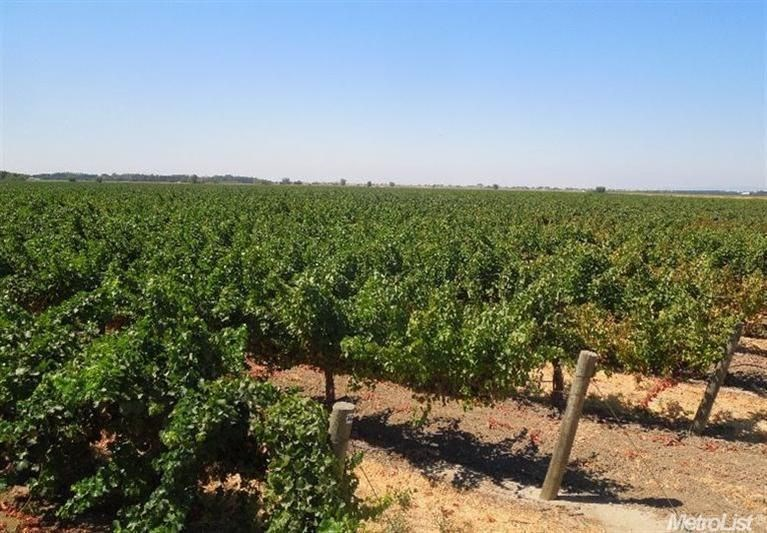 Northern California Vineyard Properties For Sale