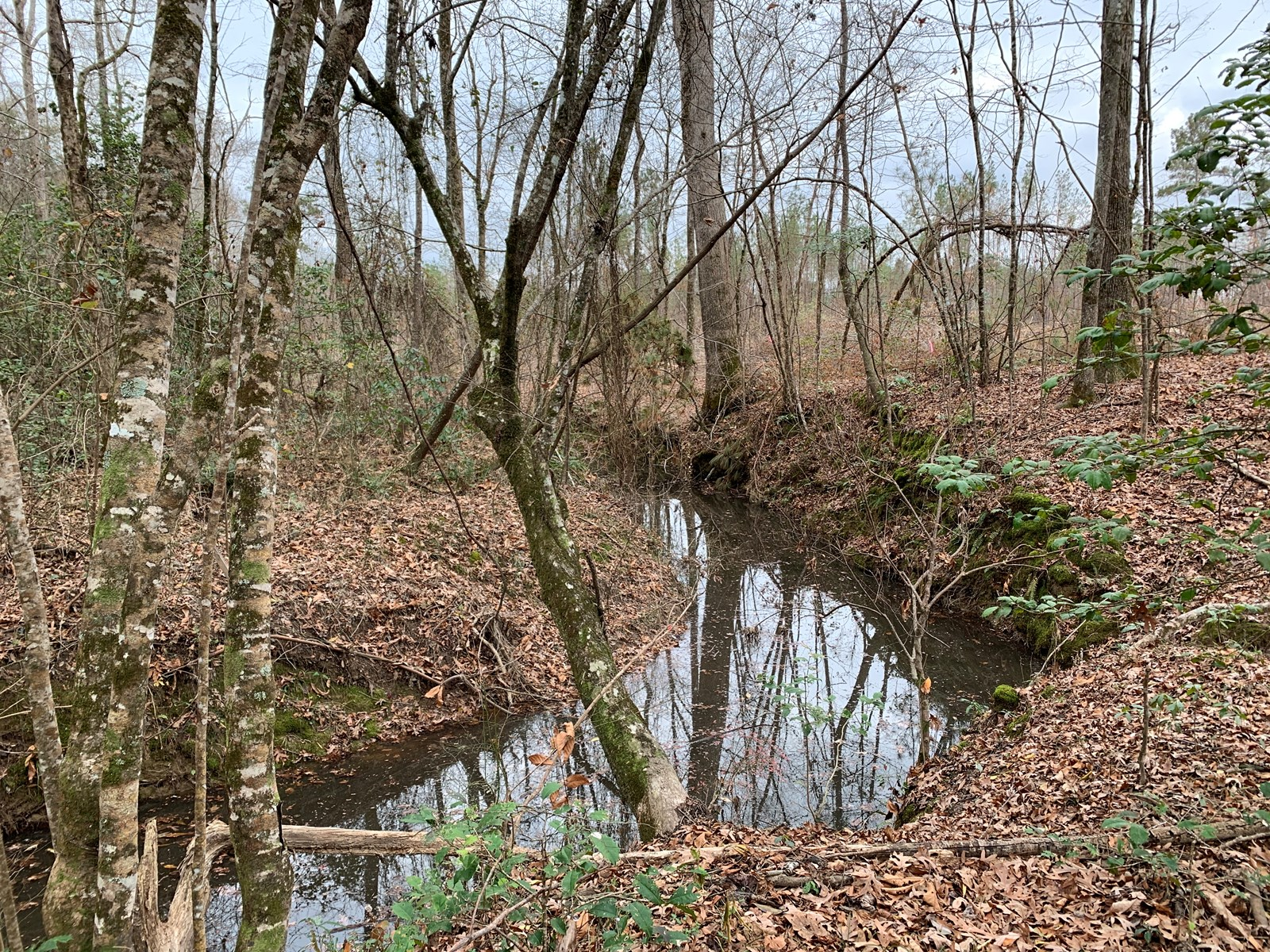 Cleared Timberland for Sale with Hardwood Creek Union Co.