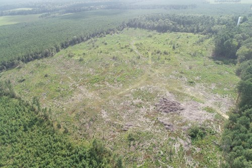 Open /Cleared Timberland for Sale near Strong-Huttig, AR