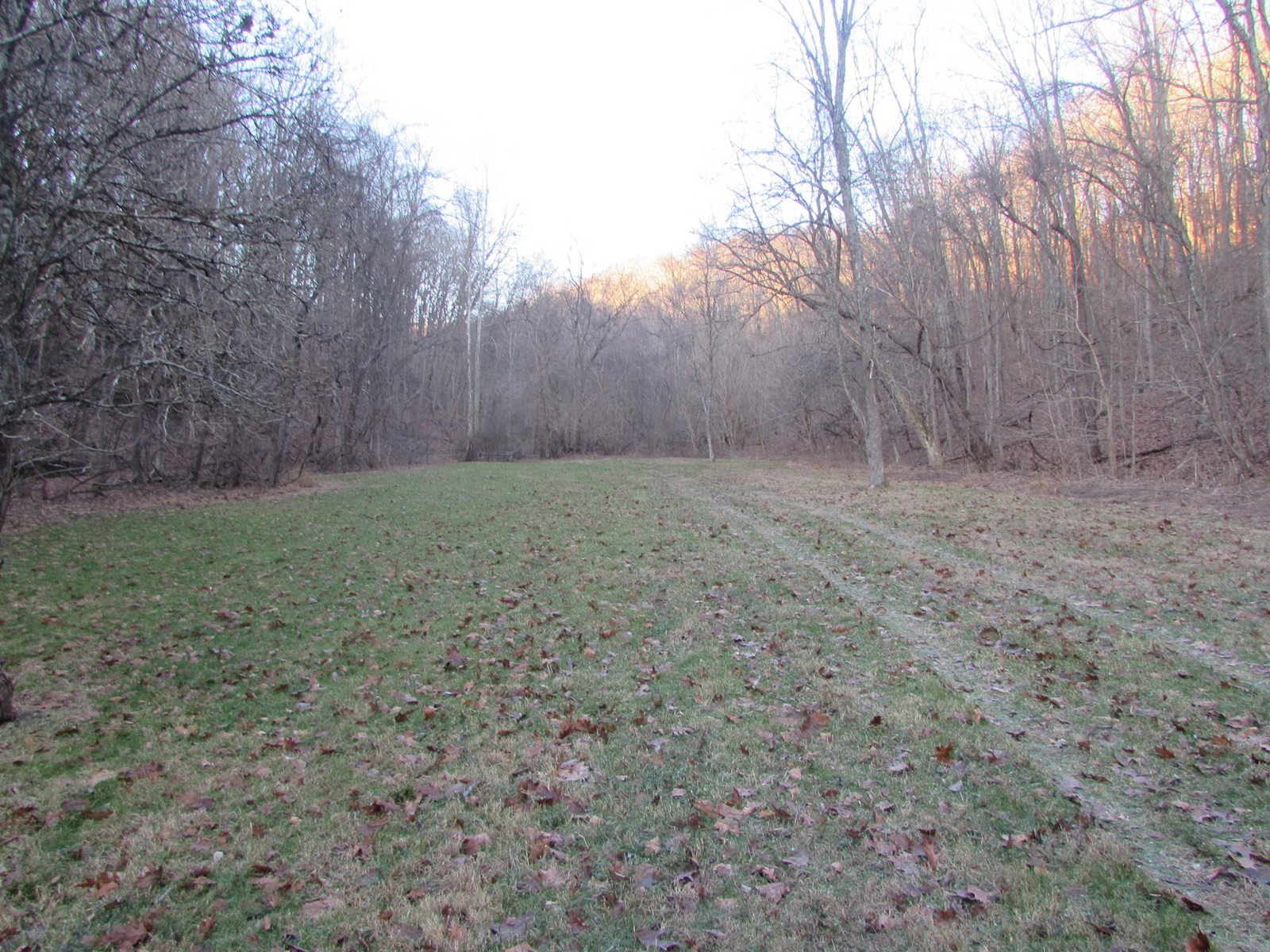 58.68 Acres of Secluded Land Located in Tyler County, WV