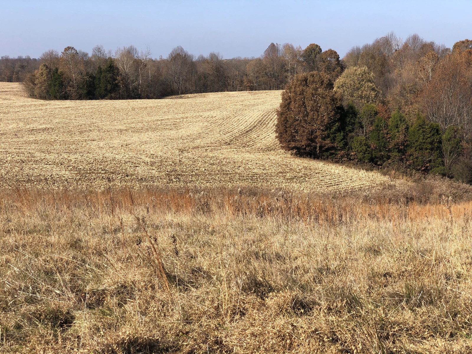 Land Auction in Tracts plus Ag & Const Equipment For Sale