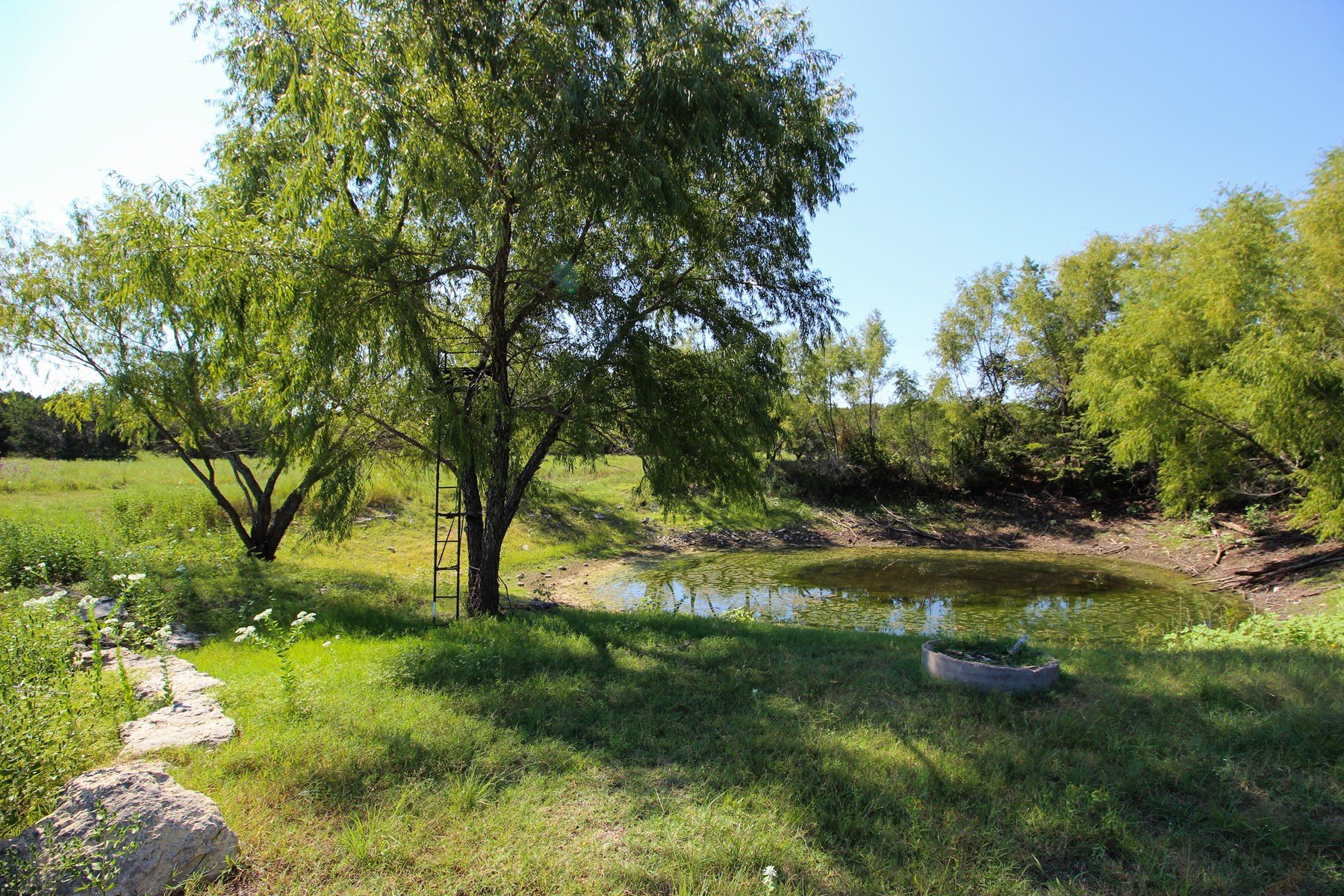 Land for Sale in Gatesville, Texas with Barndo and Hunting
