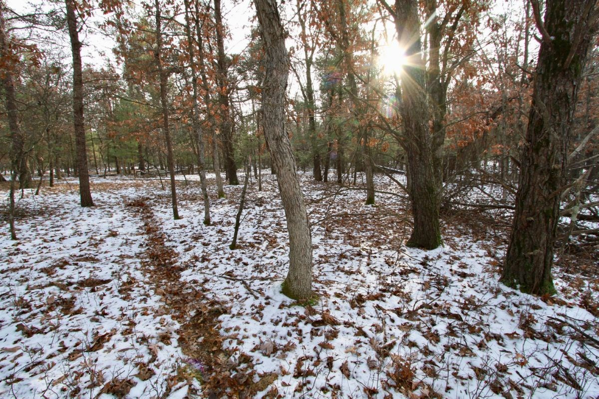 Buildable Lot 1 Within City Limits of Adams, WI