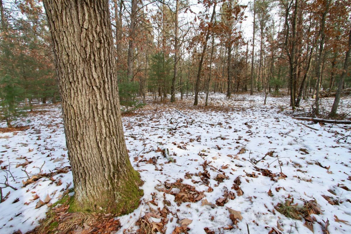 Buildable Lot 2 Within City Limits of Adams, WI