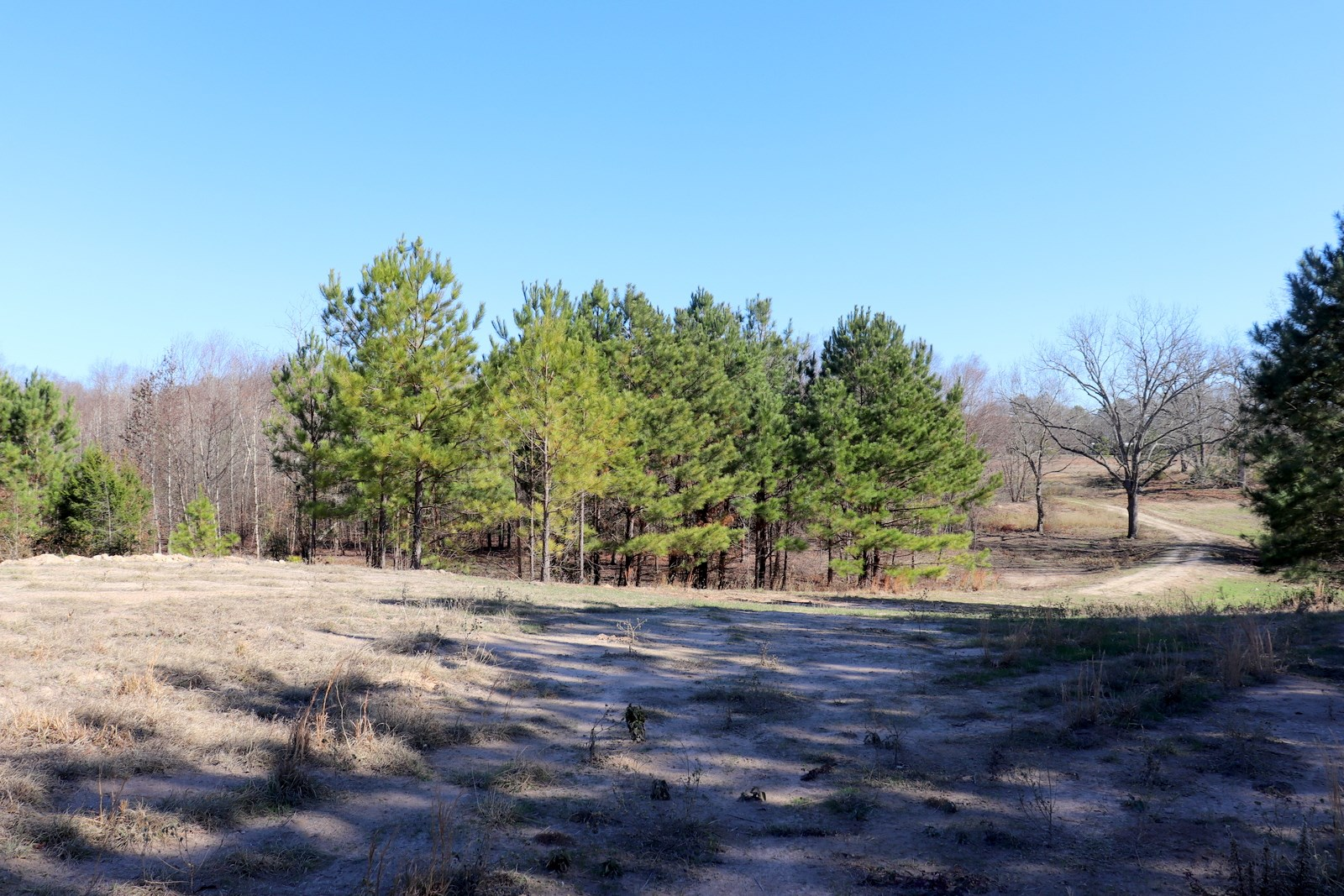 48 ACRES WOOD COUNTY - WINNSBORO, TX - 2 PONDS - SHOP