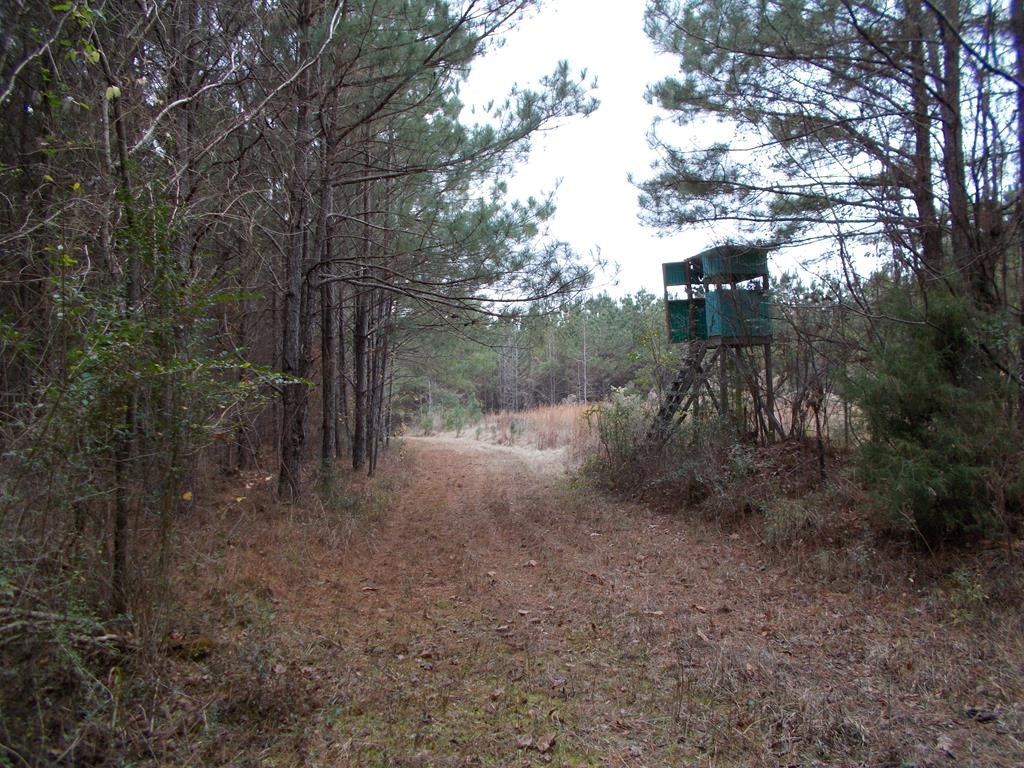 40 Acres Hunting Property Copiah County Hazlehurst MS