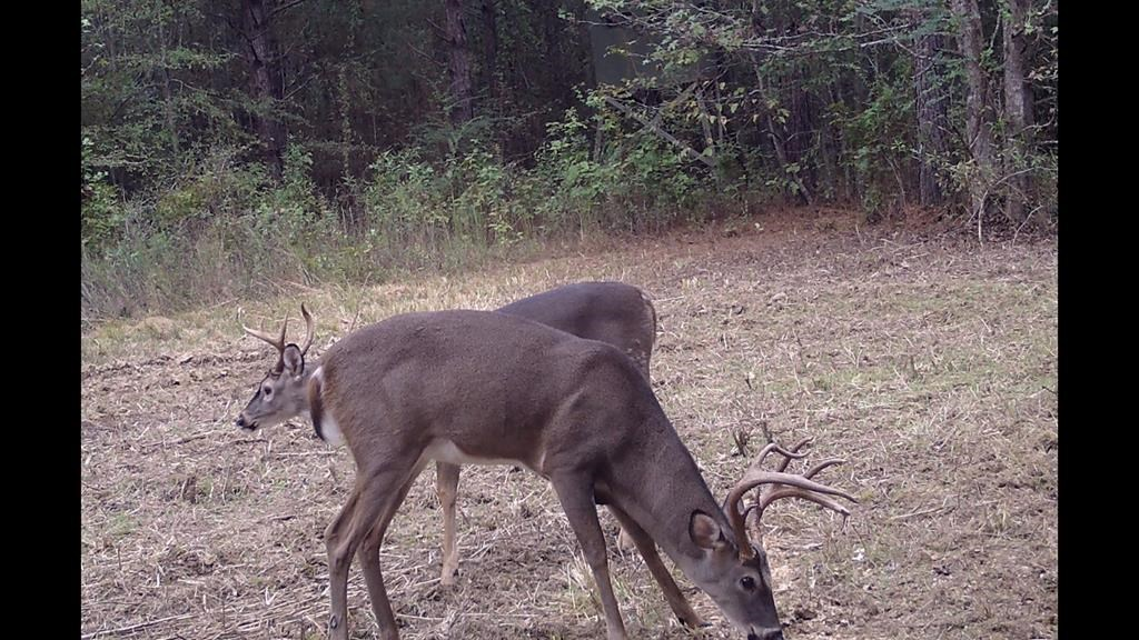 12 Acres Lincoln County MS near Homochitto National Forest