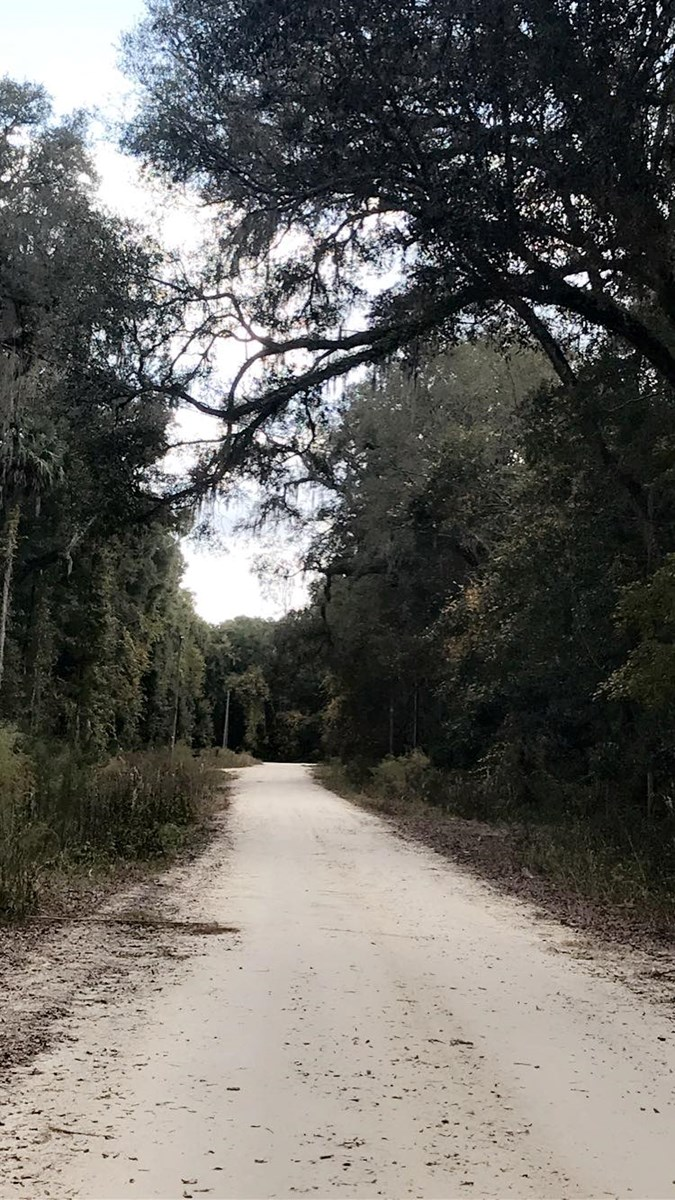LAND FOR SALE DIXIE COUNTY OLD TOWN FLORIDA
