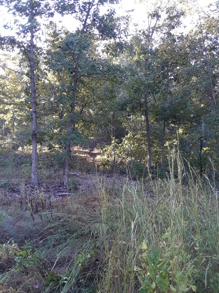 10 Acres in Ozark Co. Near Rivers and Lakes