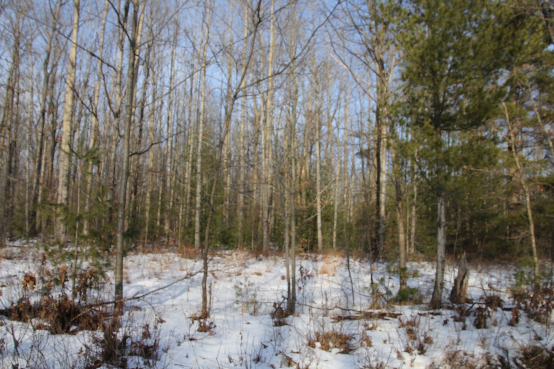 5-Acres For Sale Northern MI Montmorency County Hunting Land