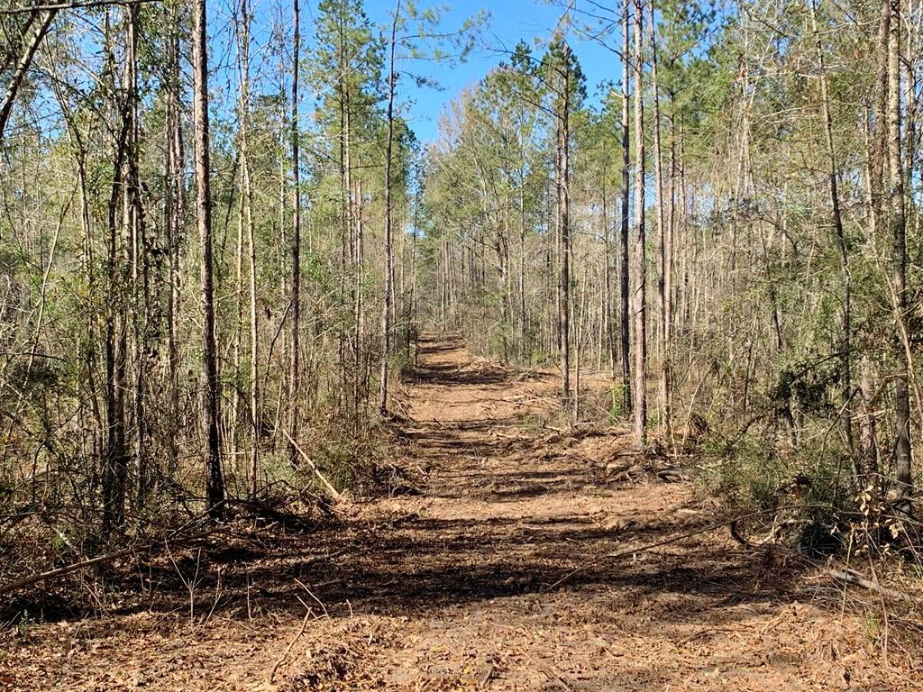 48 Acres Amite County, MS Timber & Hunting Land for Sale
