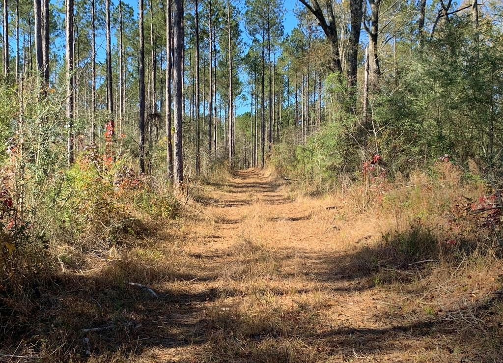 36 Acres Amite County, MS Land for Sale with Timber & Ponds