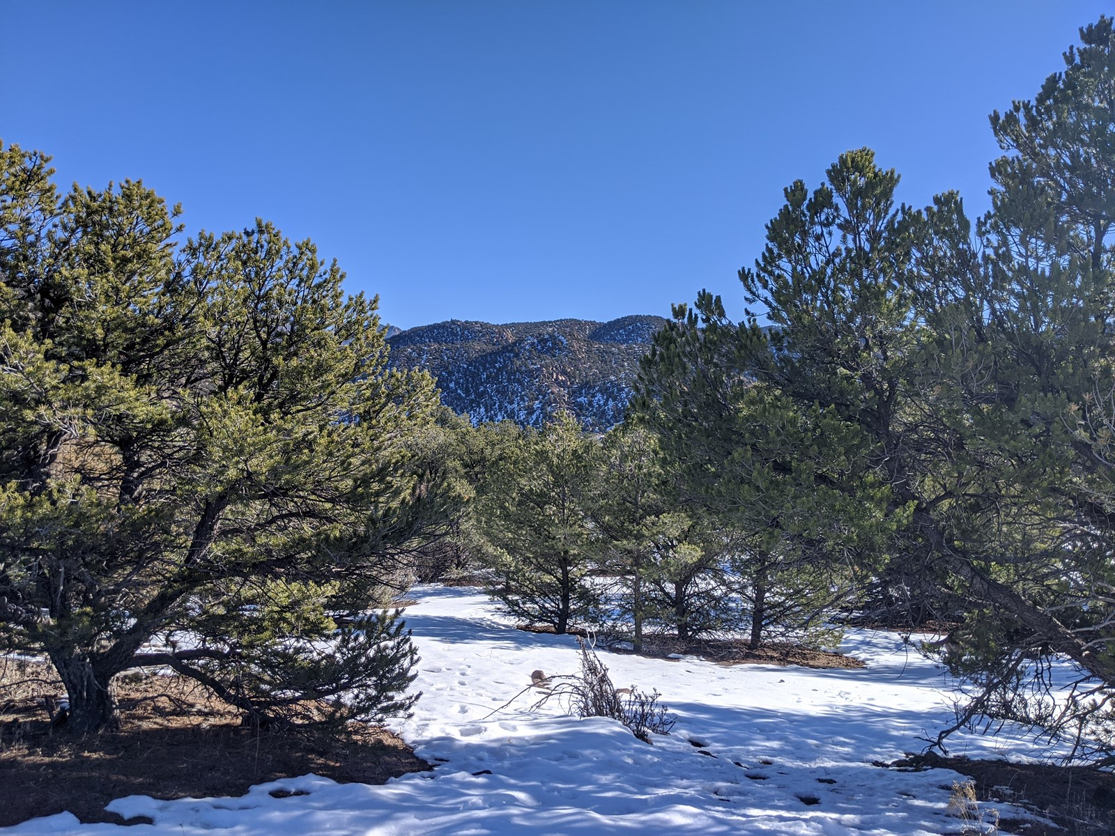 Property For Sale in Mtns Near Salida CO & Arkansas River