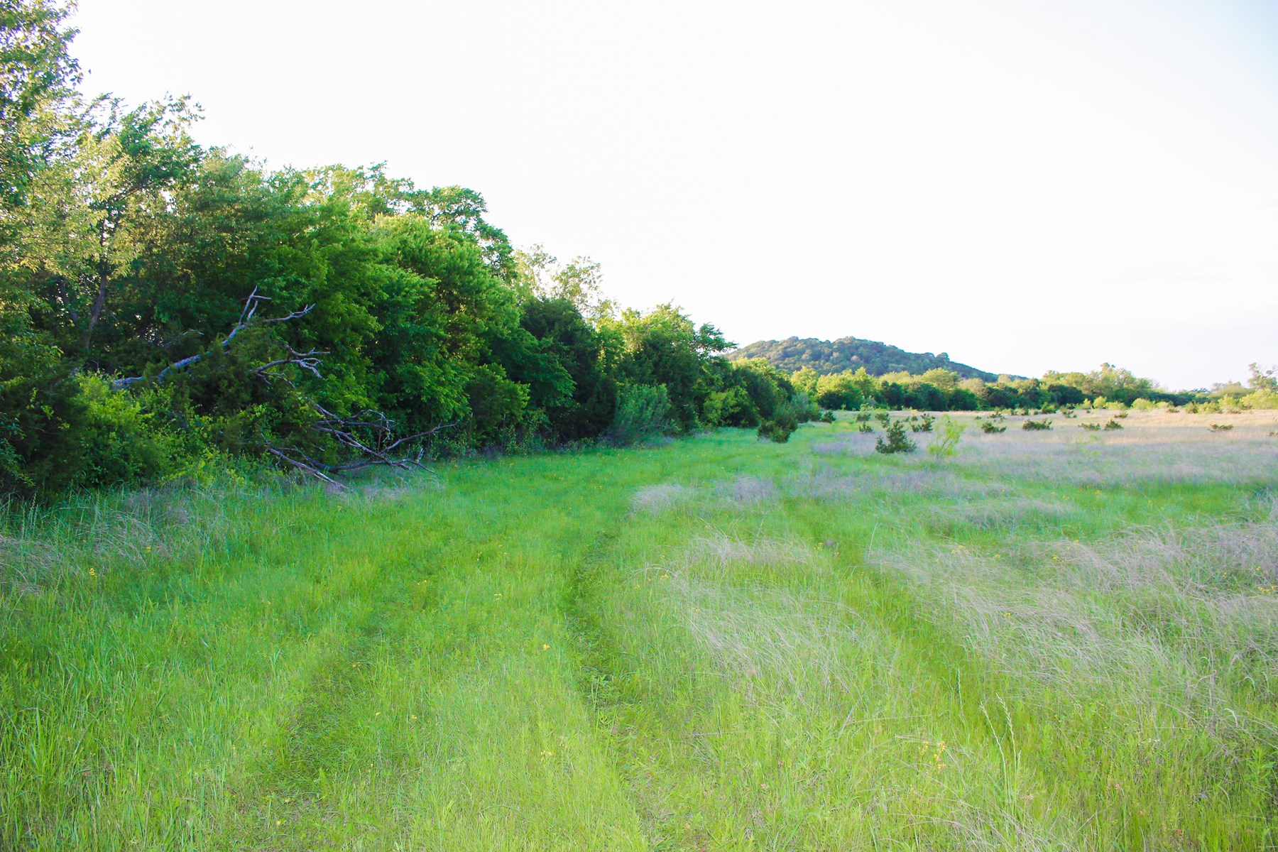 29+/- Acres in Coryell County- Creek, Hunting, Wildlife
