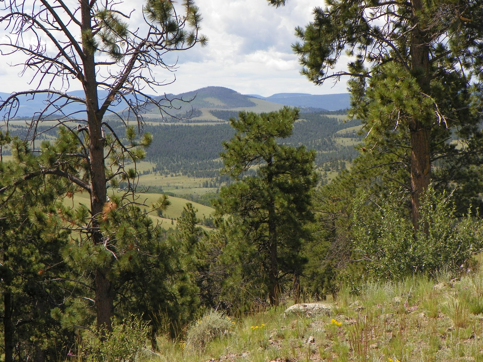 Large Acreage CO Mtn Hunting Ranch Gunnison For Sale