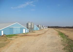 PICKTON, TX POULTRY FARM - 74 ACRES - 3/2 HOME - EAST TEXAS