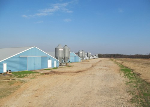 PICKTON, TX POULTRY FARM - 74 ACRES - 3/2 HOME - EAST TEXAS