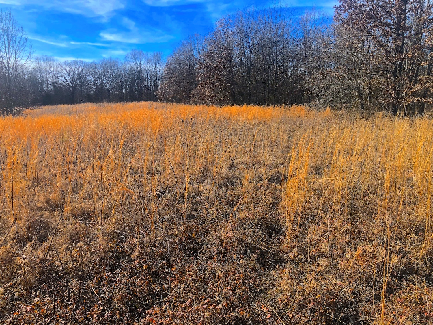 Vacant Land For Sale in the Ozarks
