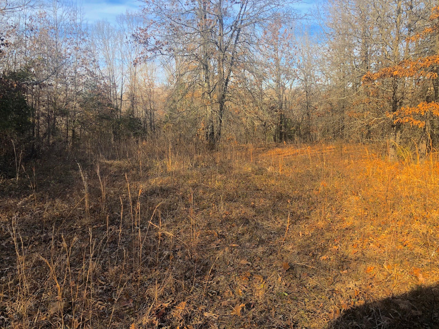 Land for Sale in Missouri Ozarks
