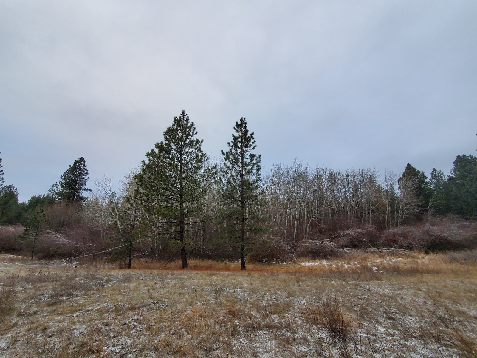 Amazing Fruitland, WA 40 Acres of timberland for sale!