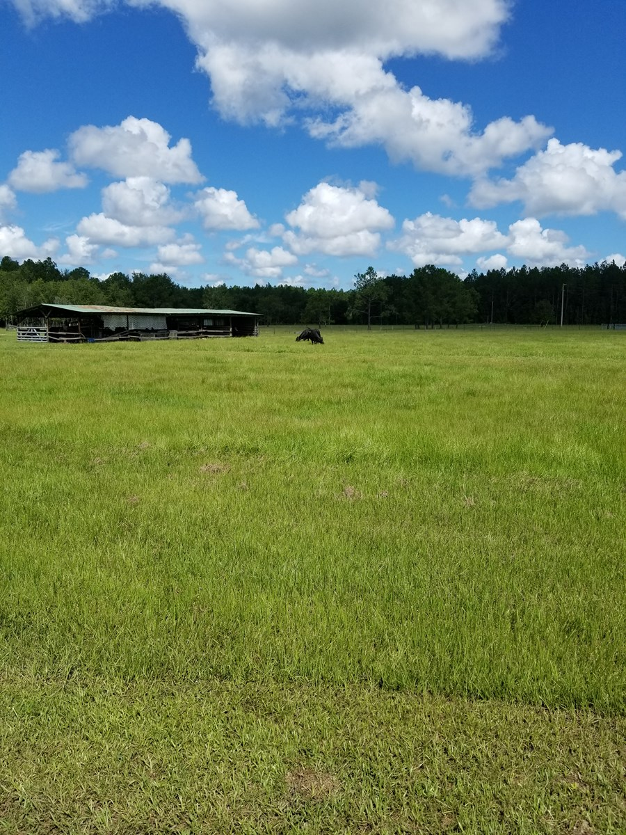 Vacant land with cattle, equipment and mobile home included!