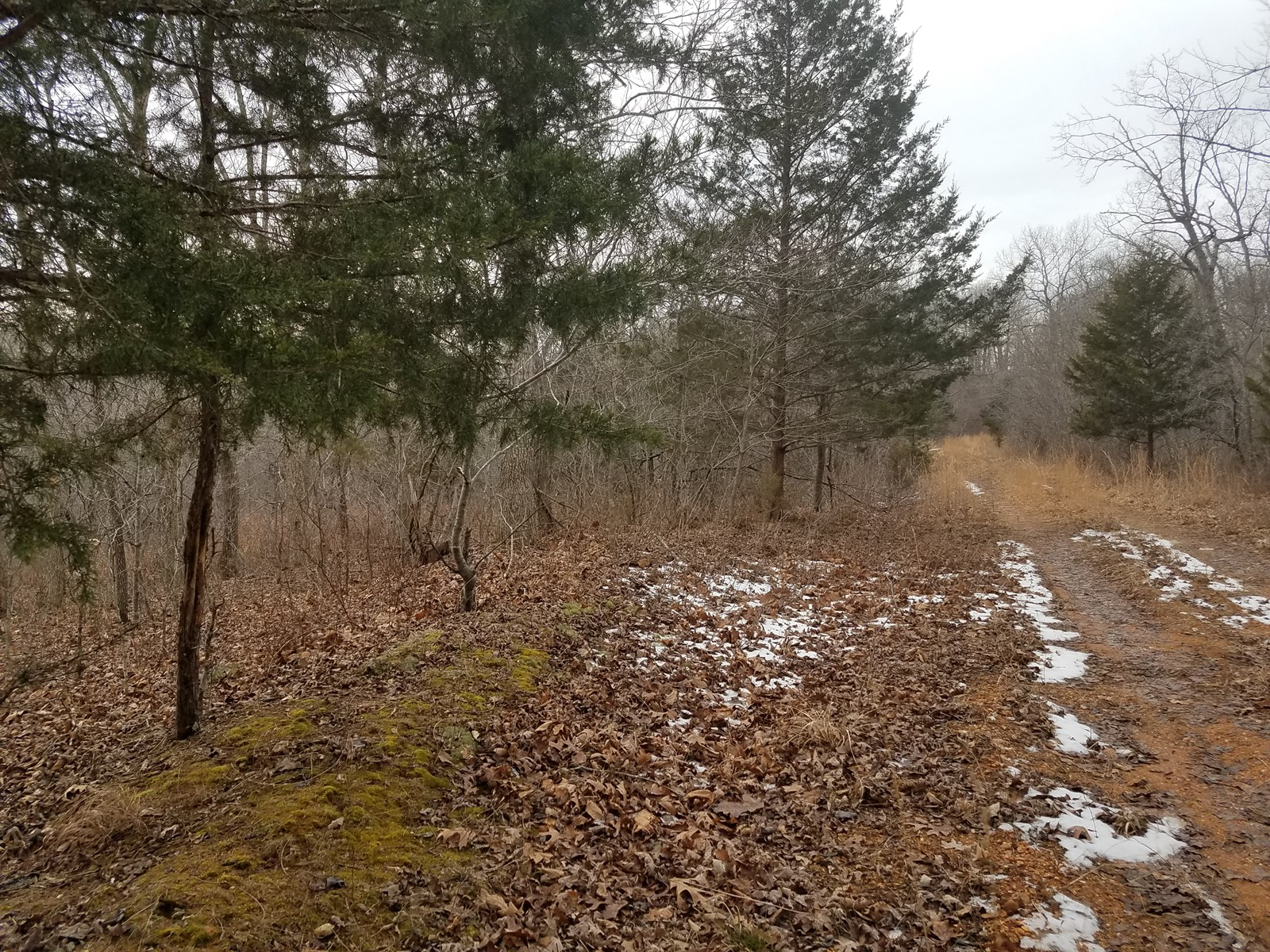 Land For Sale Near Lake of the Ozarks! 11 Acres! Surveyed!