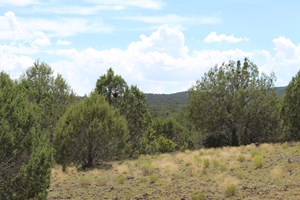 HUNTING LAND IN NORTHERN AZ