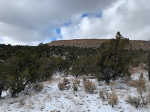 NORTHERN NEW MEXICO HUNTING PROPERTY FOR SALE