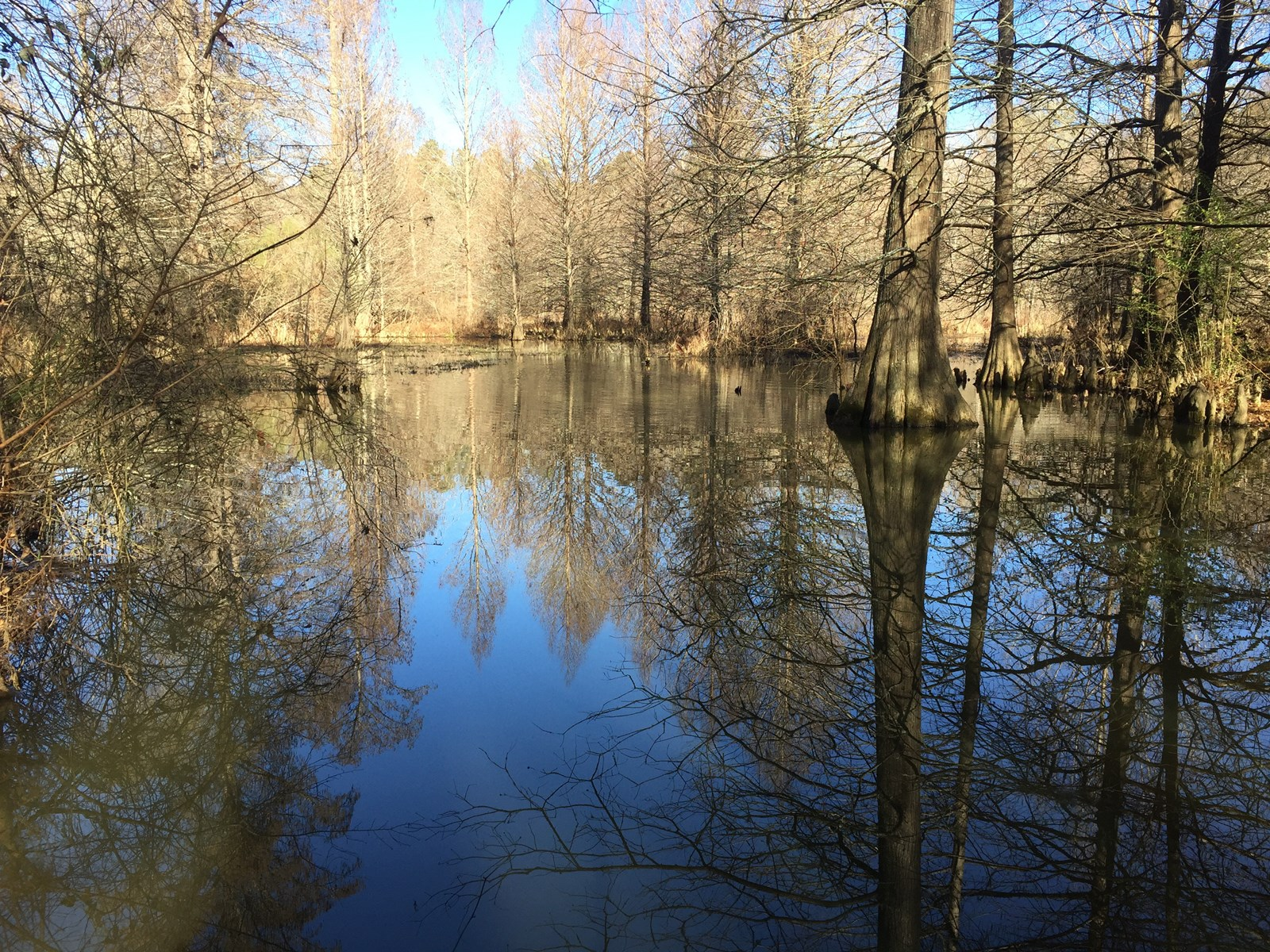 East Texas Land For Sale, Creek, Huge Cypress trees, 23.4 ac