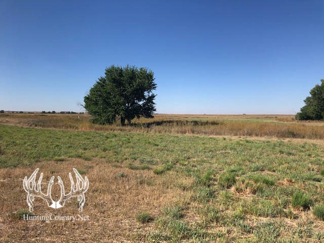 320 acres m/l GRAY COUNTY KANSAS LAND for SALE