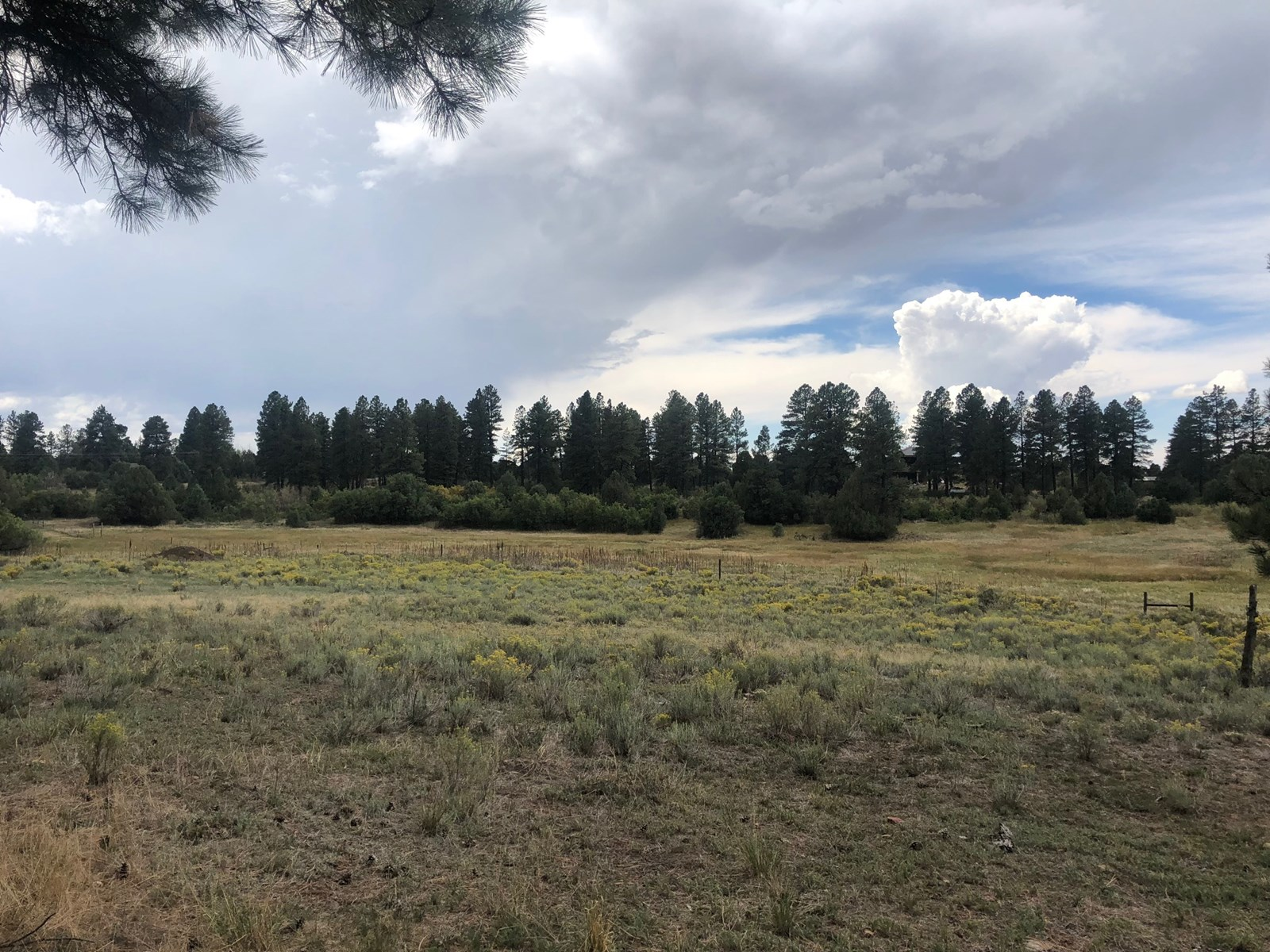Wooded and cleared lot with views and equine potential in CO