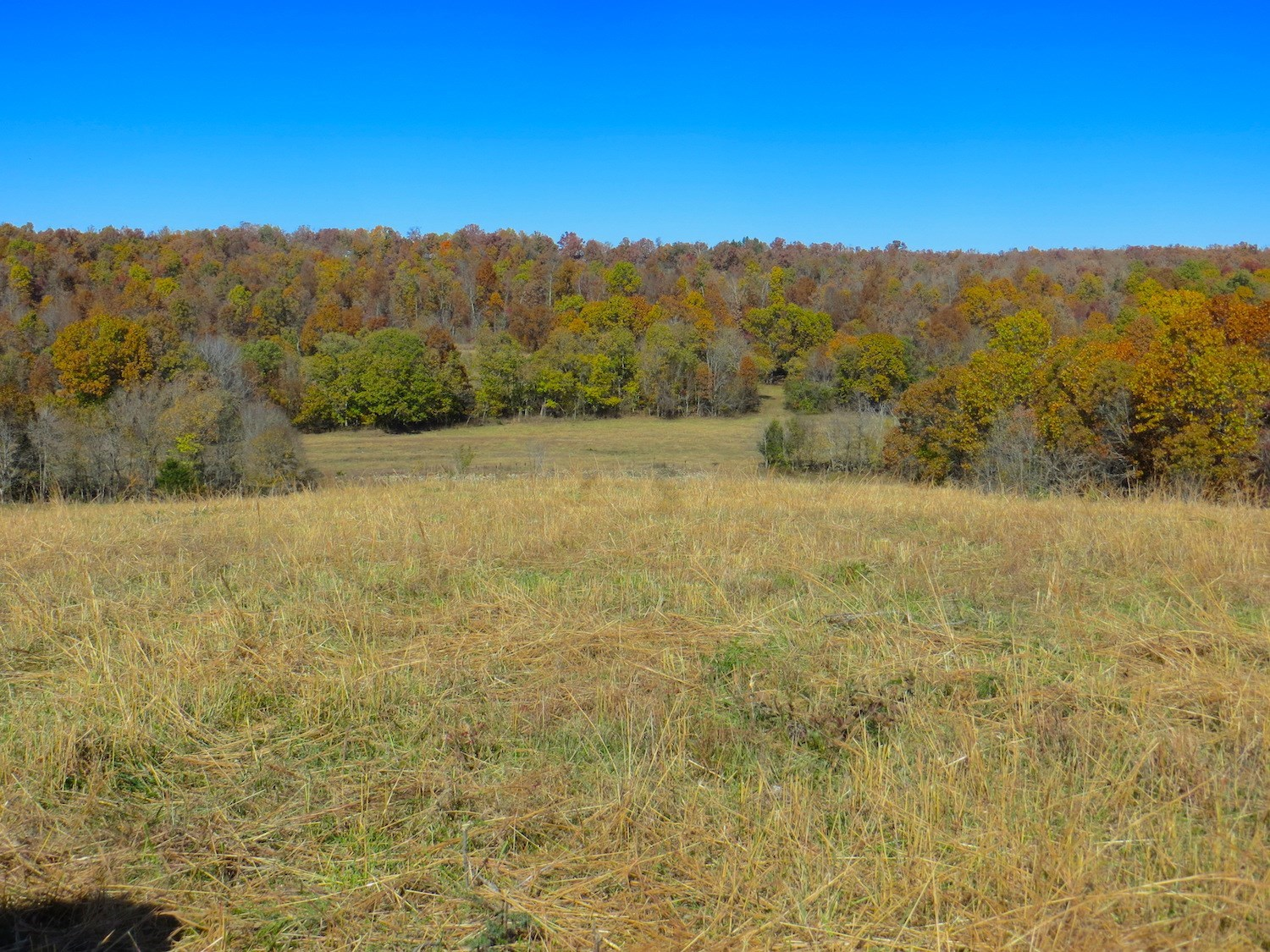 Farm for Sale in Mammoth Spring, Arkansas