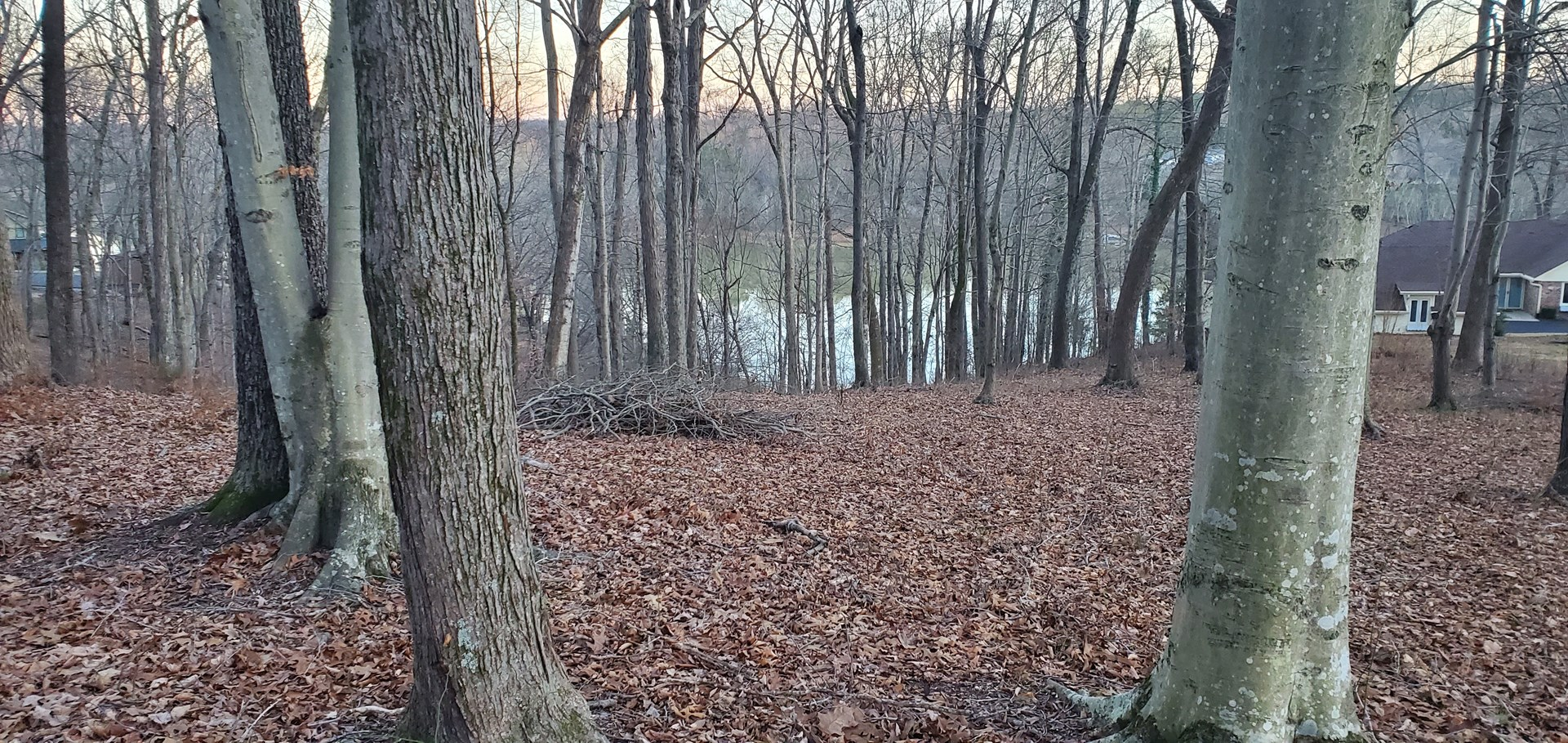 Nice wooded, lakefront lot on Barren River Lake for sale.
