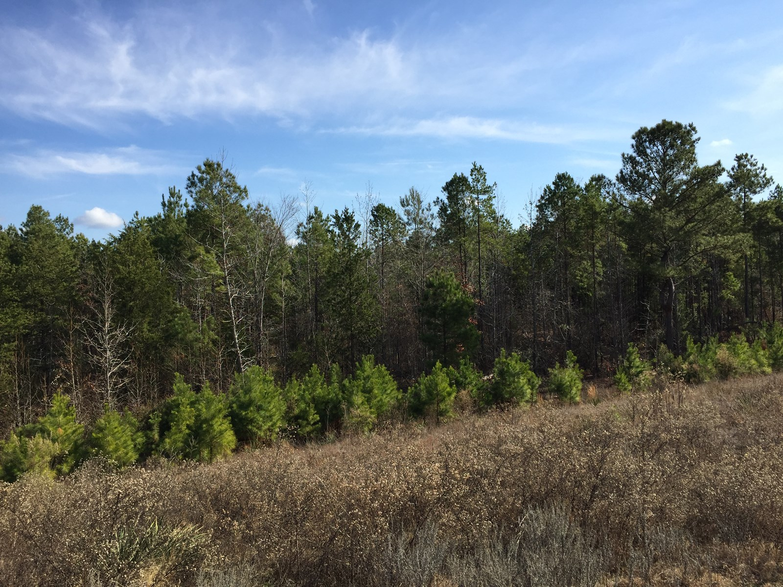 East Texas Land For Sale, 60 ac, home site/hunting property