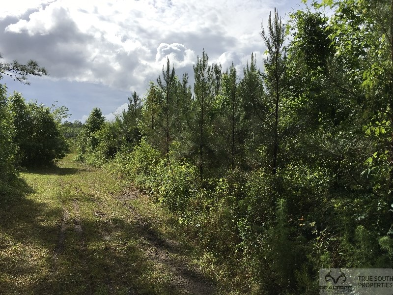 Ruffin 15 AC Timber / Hunting / Recreation