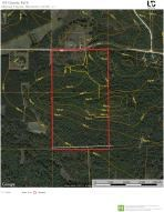 Thick recreational hunting woods with building sites.