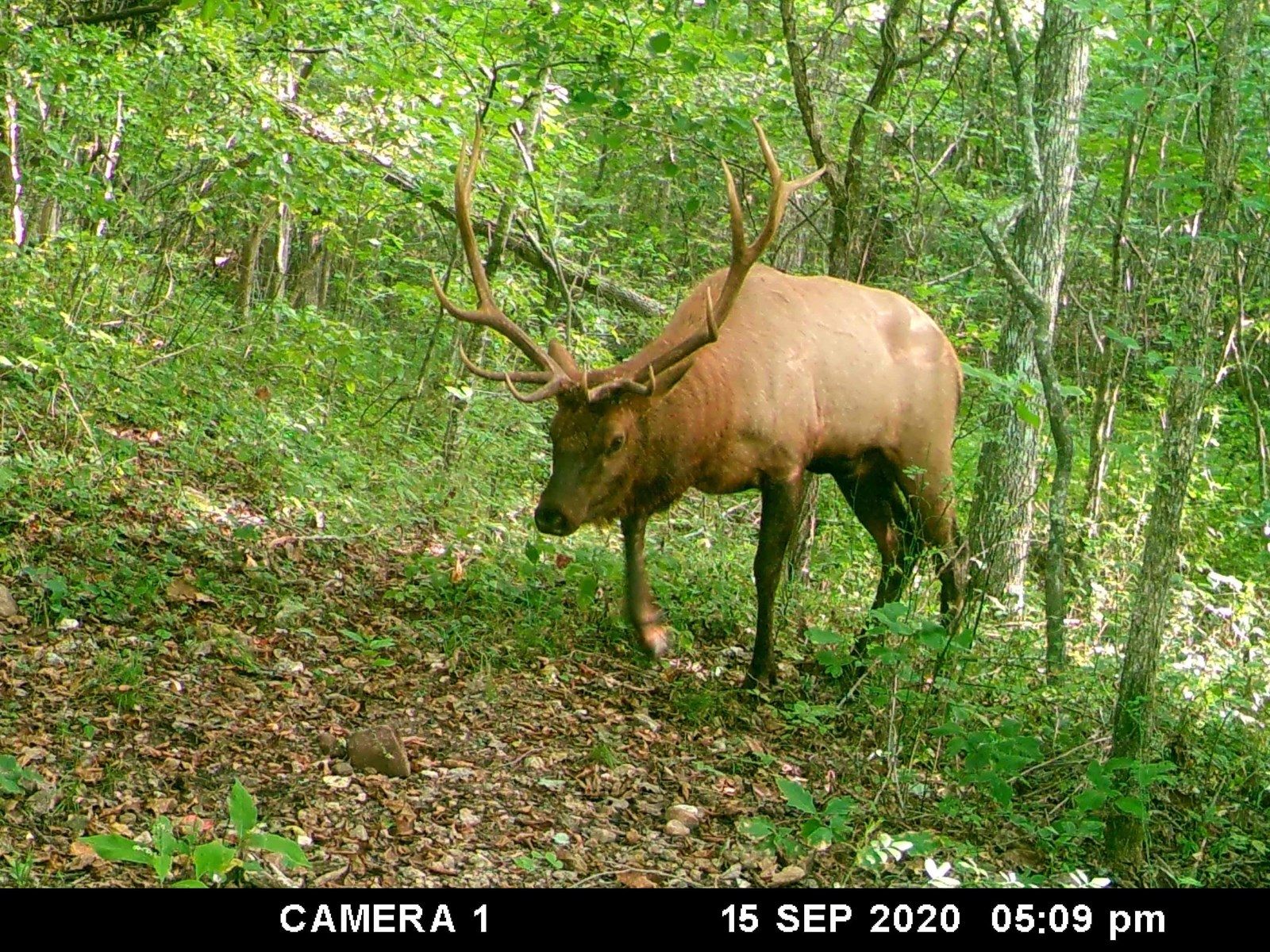 MISSOURI HUNTING LAND - 57.77 ACRES - TROPHY ELK,DEER,TURKEY
