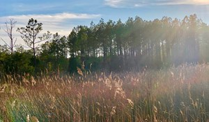 HUNTING TRACT FOR SALE IN HYDE COUNTY, NC/RECREATIONAL
