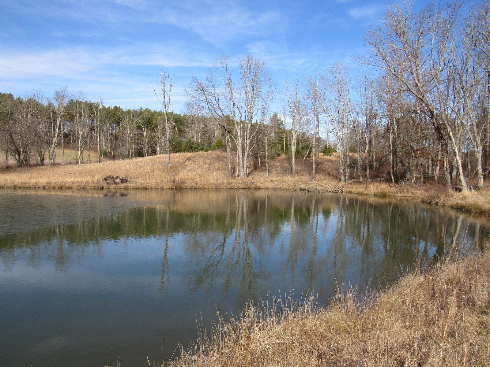 Open Land with Pond for Sale in Floyd VA