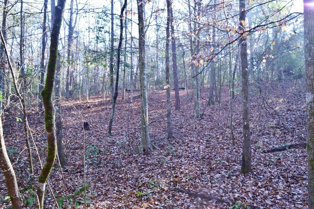 Hunting Timber Land For Sale Holmesville, Southwest, MS