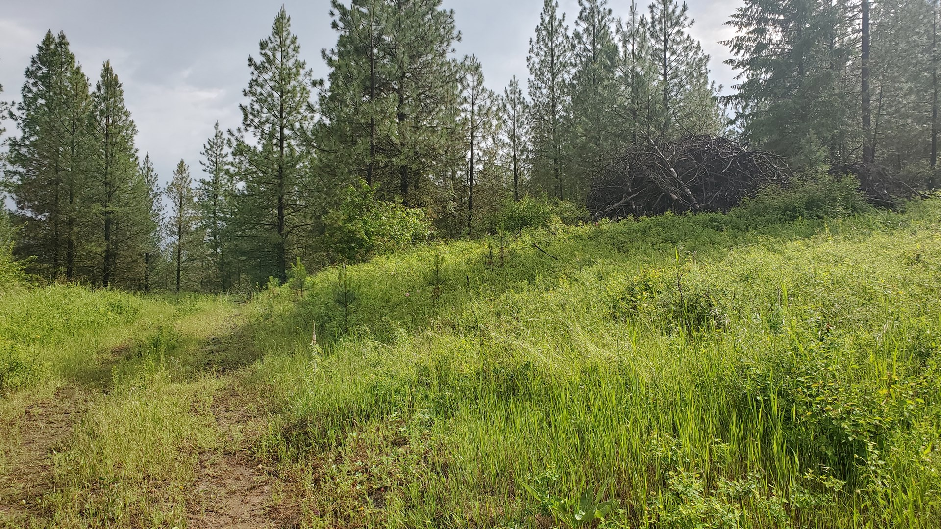 Washington State 40 Ac Recreational, Timber land for sale