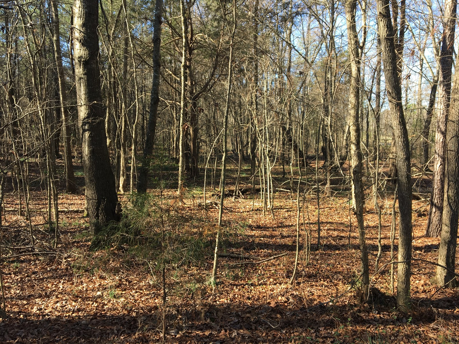 ~35 Wooded Acres in Southern Chatham Co.