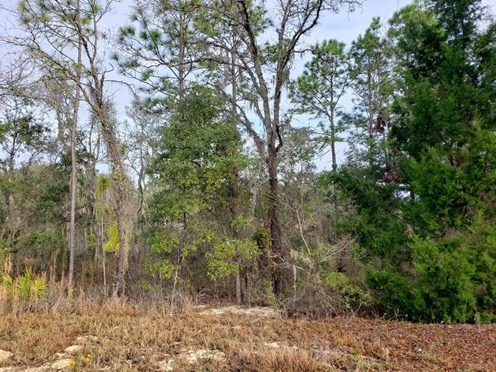FOX GROVE FARMS SUBDIVISION - VACANT LOT - Morriston, FL