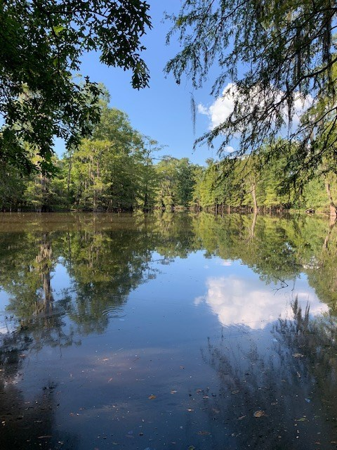 1700 Acres Hunting Property Timberland LaSalle Parish  LA