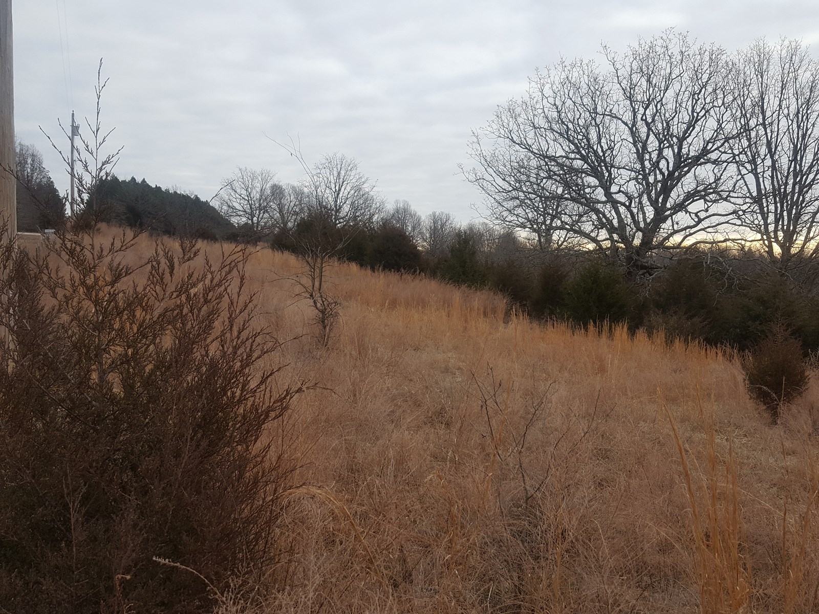 Vacant Land for Sale in South Central Missouri Ozarks